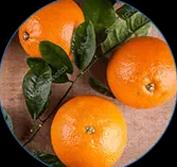 oranges amères